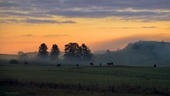 in the morning (AndyW Harz) Tags: nebel fog mist sonnenaufgang sunrise