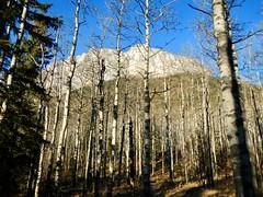 Mt Yamnuska Summit Scramble - Through the trees our summit destination (benlarhome) Tags: yamnuska alberta canada kananaskis scramble scrambling hike hiking trek trekking trail