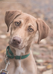 To me, photography is an art of observation. Its about finding something interesting in an ordinary place Ive found it has little to do with the things you see and everything to do with the way you see them.  Elliott Erwitt (doranyiro) Tags: cute dog dogwalk dogportrait dogshelter outdoor nature mix ears funny beauty beautiful eyes canon canon40d concentration contrast portrait animal pet