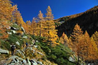 L'Oro della Val Troncone