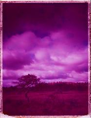 Harsh land (Maija Karisma) Tags: polaroid instant pola littlebitbetterscan nature polaroid100landcamera 689 expiredfilm peelapart