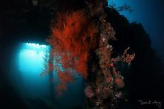 AFTERNOON LIGHT (Randi Ang) Tags: libertywreck usatliberty wreckdive shipwreck tulamben bali indonesia underwater scuba diving dive photography wide angle randi ang canon eos 6d fisheye 15mm randiang