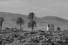 Fuerteventura SW-8 (fotolulu2012) Tags: blackandwhite black animals schwarzweiss weiss schwarz tierfotos blackendwithe schwarzweissbilder avibase