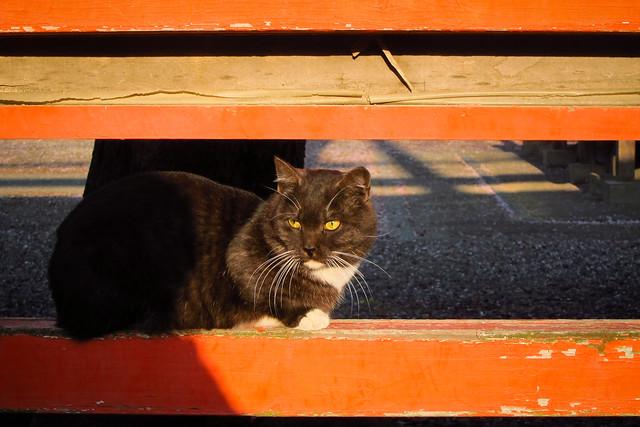 Today's Cat@2012-04-18