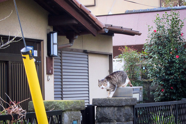 Today's Cat@2012-04-21