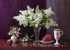 O Night, O Sweetest Time... (Esther Spektor) Tags: flowers red stilllife food brown white color colour reflection green art texture cup leaves yellow fruit night composition canon silver petals spring stem ceramics branch pattern purple crystal blossom availablelight burgundy peach stilleben fantasy bloom vase apricot imagination esther bouquet tablecloth arrangement porcelain saucer bodegon naturemorte artisticphotography naturamorta spektor photomix naturezamorta creativephotography artdigital artofimages exoticimage blinkagain bestevercompetitiongroup creativephotocafe eshterspektor