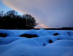 Winterabend (Jane 911) Tags: wood schnee winter snow germany deutschland abend sonnenuntergang natur feld sonne wald bume erde maulwurfhgel