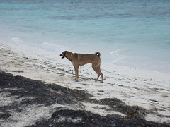 2013-06-04 Casitas Kinsol dogs at the beach - Puerto Morelos - Quintana Roo - Mexico (9) (Alain Berthelot) Tags: dog storm beach dogs rain june fun puerto juin andrea taxi beaches tropical nena plage rains between morelos morales plages 2013 moralos