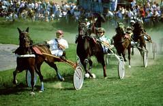 Trabrennen , 67-8 (roba66 (Thx for 20 Mill. views)) Tags: horse caballo cheval pferd trabalho chevaux trabrennen traber roba66