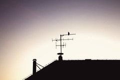 Perfect View (C_MC_FL) Tags: vienna wien roof light chimney sky house bird silhouette canon photography eos austria evening abend licht sterreich twilight sitting fotografie sonnenuntergang sundown himmel haus crow tamron dach antenne antenna vogel krhe sitzen abendlicht umris rauchfang kontur zwielicht 18270 60d b008 dachantenne