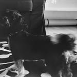 lomography - karl our dog