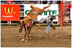 Wm-loving-it (ATEWITHREL) Tags: horse cowboy salinas rodeo bronco