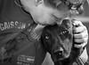 Petra & Mola (tolltroll11) Tags: dogs hunde bardino