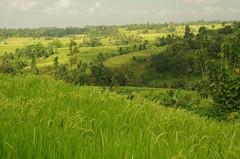 2015-05-16 Bali 052 (louisvolant) Tags: bali jatiluwih jatiluwihricefields