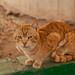 Street cat Hargeisa