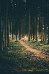 Waldluferin (sfp - sebastian fischer photography) Tags: landschaft natur oktober2016 schwarzwald landscape nature blackforest furtwangen sonnenuntergang