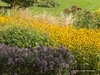 Clyne Gardens 2016 09 30 #14 (Gareth Lovering Photography 3,000,594 views.) Tags: clyne gardens botanical swansea wales flowers trees shrubs park olympus stylus1s garethloveringphotography