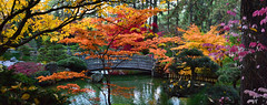 Nishinomiya Tsutakawa Japanese Garden (James_D_Images) Tags: nishinomiya tsutakawa japanese garden manito park spokane washingtonstate autumn fall colour red orange pink green water pond bridge serene panorama