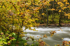 Fall stream (jeff's pixels) Tags: mount rainer national forest creek river longexposure wideangle nature beauty fall autumn tree rock nikon d750 stream