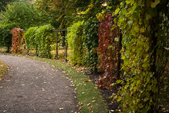 Lined up (Infomastern) Tags: botanicgarden botaniskatrdgrden lund autumn fence hst leaf lv exif:model=canoneos760d exif:isospeed=400 geocountry camera:make=canon geocity camera:model=canoneos760d geostate geolocation exif:lens=efs18200mmf3556is exif:focallength=35mm exif:aperture=40 exif:make=canon