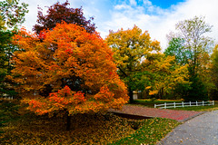 Beautiful Autumn Colours (DDB Photography) Tags: fall autumn beautiful colour color colours colors leaf leaves outdoor outdoors nature naturephotography fence white grass sky blue road street pavement foliage plant plants