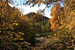 IMG_7330 (hudsonleipzig80) Tags: schwarzwald blackforest natur nature outdoor badenwrtemberg autumn herbst fall tree baum bume wutach wutachschlucht schlucht river fluss flussbett rock steine felsen granit canon canoneos1200d eos1200d eos 1200d