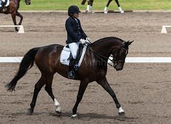 161023_Aust_D_Champs_Sun_Med_4.3_6837.jpg (FranzVenhaus) Tags: athletes dressage australia siec equestrian riders horses performance event competition nsw sydney aus