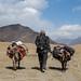 Kadam e os dois burros