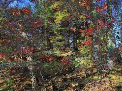 IMG_9414  ©2016 Paul Light (Paul Light) Tags: dxpapp massachusetts landscape multipleexposure