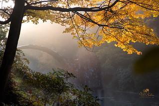 Herbstwald in Kromlau