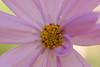 20160924_Cinq_Sens_Yvoire (11 sur 13) (calace74) Tags: fleurs macro jardinsdes5sens yvoire rhonealpes foretderipaille hautesavoie nature panorama thononlesbains
