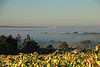 Mer de brouillard périgourdine (Damia Bouic) Tags: bergeracois creysse dordogne périgord aquitaine brouillard pécharmant