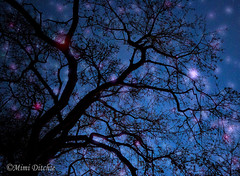 Fantastic Night (Mimi Ditchie) Tags: night stars tree starry topaz topazstareffects fantasy