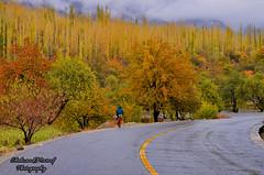 The Walk (Shehzaad Maroof Khan) Tags: walk hunza kkh karakoram highway gilgitbaltistan colors nature fog pakistan
