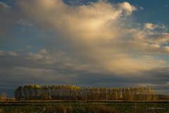 Remate otoñal (AvideCai) Tags: avidecai paisaje tamron2470 arboles cielo nubes atardecer otoño