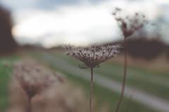 autumn walk (Andrea Schunert) Tags: nature outdoor landscape stilllife stillleben plant sky blauerhimmel