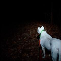 Nightime walk at CC Lake