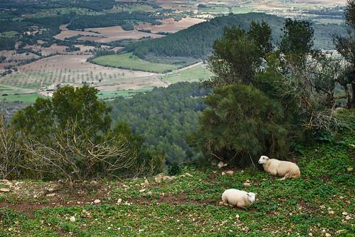 Santuari de Cura Mallorca