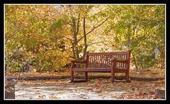 BANCO .... (MONTXO-DONOSTIA) Tags: otoo urbano otoourbano autumn udazkena city ciudad banco hojas colorido luz tranquilidad montxodonostia