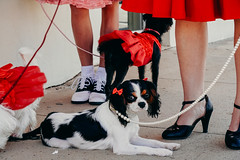 TXPhotoFest_318 (allen ramlow) Tags: texas photo festival smithville fall autumn sony a6300 2016 people costume