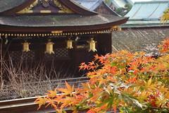 DSC02779 (MrSUIZOU) Tags: 京都 紅葉 北野天満宮 平野神社 十月桜