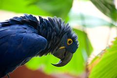 Are you talking to me? (FerencSeitz) Tags: grand hyatt kauai resort spa nikon hawaii duke bird nikor d800e animal