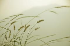 calm (Shrf AlMalki..) Tags: sunset white plant tree green art colors photoshop nikon photos best saudi arabia lone lonely minimalism malik tone  ksa     d90         sharaf  shrf       colorphotoaward     almalki colourartaward