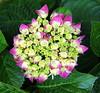 _MG_0509-001 (thantrongnhan ON / OFF) Tags: ngc npc flowerthequietbeauty