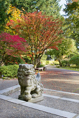 Shishi Lion Protector Stone Statue in Japanese Garden (JPLPhotographyPDX) Tags: buddhism shintoism shishi japanese garden stone sculpture statue lion fu dog park fall season autumn colors maple trees burning bush plants leaves foliage path bench architecture asian landscape protector power good luck wealth fortune prosperity mythical animal portlandjapanesegarden portland oregon washingtonpark