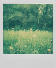 Weeds and wishes (L. McG.-E.) Tags: film polaroid sx70 instant analogue px70 impossibleproject colorprotection