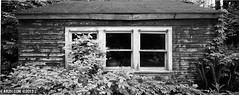 It Keeps Growing (Andy Henry Photo) Tags: blackandwhite panorama cabin woods peeling paint shift 24mm tilt f35 rokinon