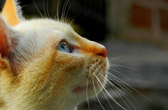 cristin (daniGiam) Tags: mi gatos gato