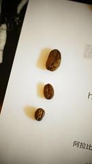 2013茵赫特拍賣會, El Injerto 2013 Auction (ErgosCoffee) Tags: auction injerto cuping ergoscoffee