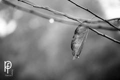 Otoo (-Patt-) Tags: bw naturaleza blancoynegro nature hojas rboles natural bn rbol